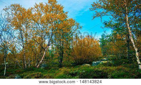 Autumn tundra.Bright and colorful Northern nature in autumn