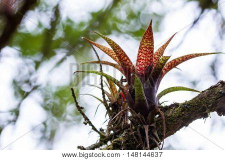 Tropical Parasitic Plants