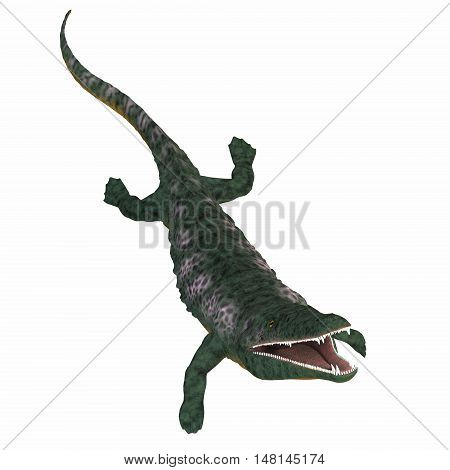 Archegosaurus Amphibian on White 3D Illustration - Archegosaurus was an amphibian tetrapod that lived in Europe during the Permian Period.