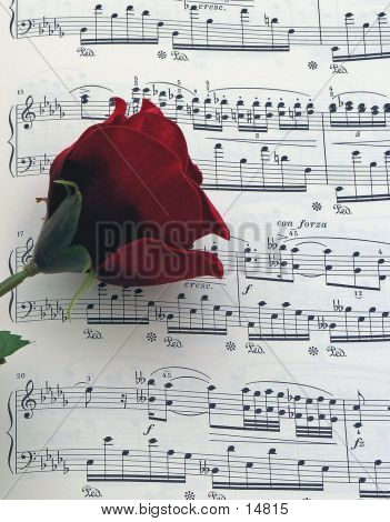 Música Rose