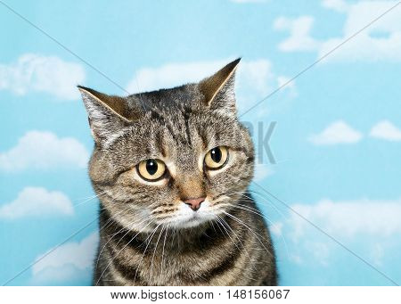 Portrait of Black grey and white tabby cat with very round face looking to viewers right. Blue background sky with white clouds. Copy space