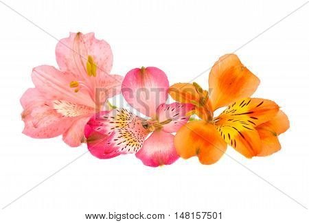 Alstroemeria bouquet, colorful on a white background