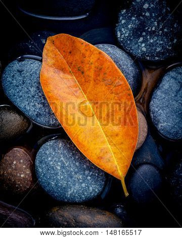 Autumn Season And Peaceful Concepts. Orange Leaves Falling On River Stone . Abstract Background Of A