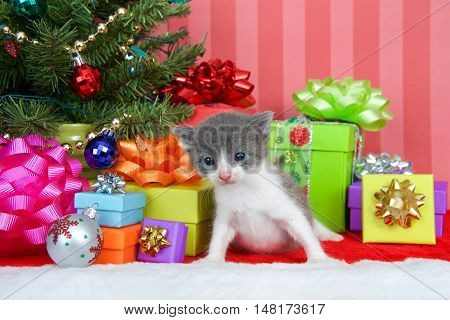 Adorable gray and white tabby kitten three weeks old sitting in a pile of christmas presents under a small tree decorated with ball ornaments and gold pearls. Copy space.