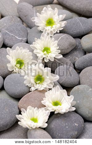 Set of daisy gerbera and stones texture