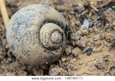 close up old shell of snail on soil