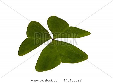 Single Isolated Green Three Leaf Clover On White Background