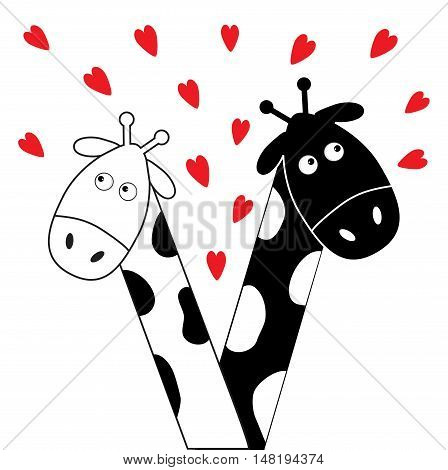 Cute cartoon black white giraffe boy and girl with little hearts. Camelopard couple on date. Long neck. Funny characters. Happy family. Love greeting card. Flat design. Isolated. Vector