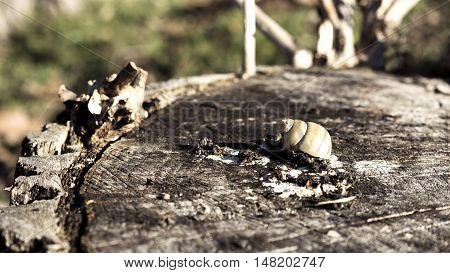 Snail Shell On A Log