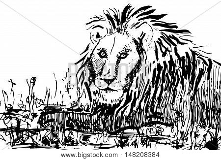 Lion on nature isolated on a white background. Vector illustration.
