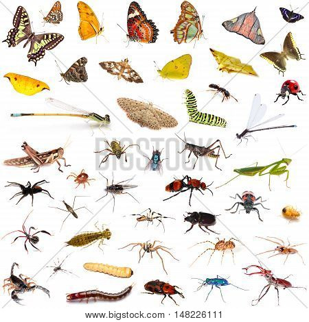 Set of colorful tropical butterflies and insect zoology entomology biology