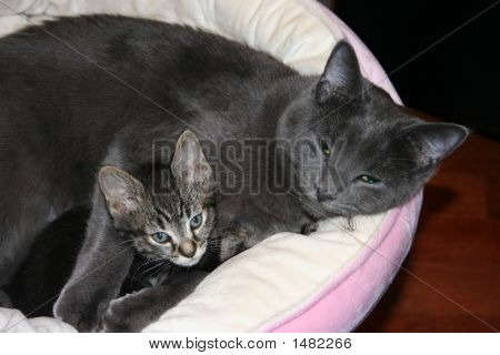Mother Cat And Kitten In Basket