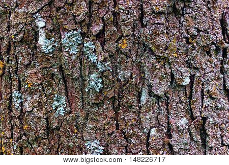 Old wood texture of tree bark. Background.