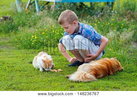 smiling little boy in a plaid shirt feeds homeless cat and redhead stray dog in the yard dog lies cat - eats