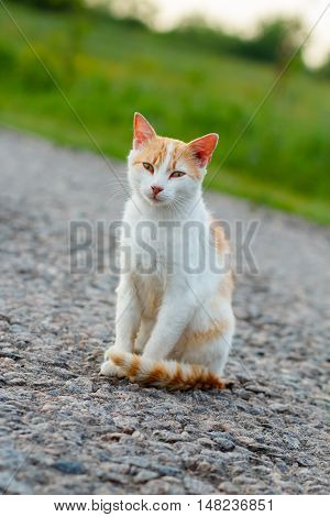 Homeless red cat sitting on the warm asphalt road. A stray cat looking at the camera