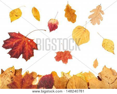 Leaf Litter And Falling Autumn Leaves Isolated