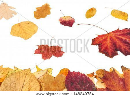 Leaf Litter And Falling Yellow And Red Leaves