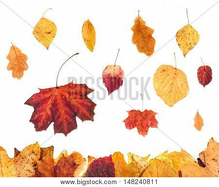 Collage From Red And Yellow Leaves Isolated