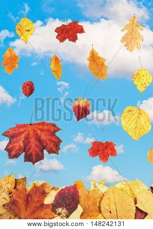 Autumn Leaves And Blue Sky With White Clouds