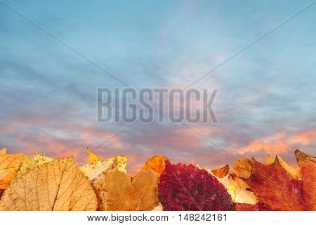 Autumn Fallen Leaves And Blue And Pink Sunset Sky