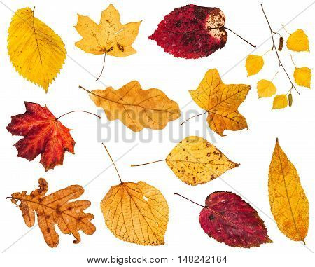 Collage From Various Yellow And Red Leaves
