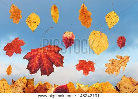 Falling Autumn Leaves And Sky With Rain Clouds
