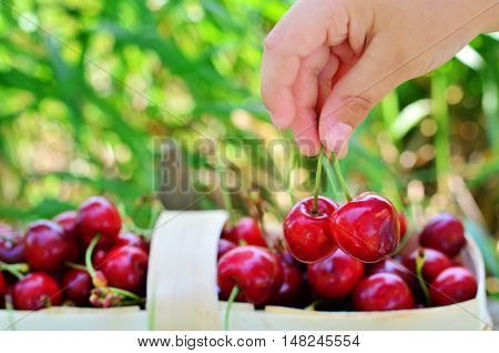 Child's hand, which takes two cherries from a basket full of berries