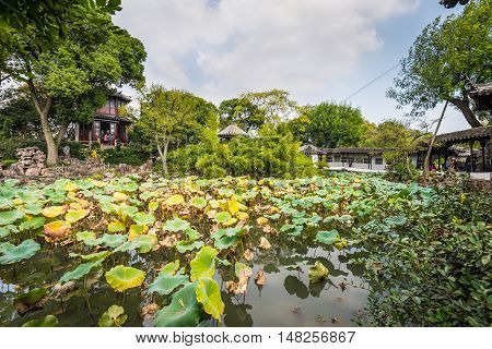 Suzhou China - October 232016: One hundred kinds of lotus in the Humble Administrator's Garden a Chinese garden in Suzhou a UNESCO World Heritage Site.