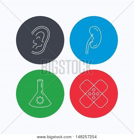 Lab bulb, medical plaster and ear icons. Kidney linear sign. Linear icons on colored buttons. Flat web symbols. Vector