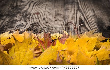 Dark grunge wooden natural background with yellow maple leaves, empty space for text