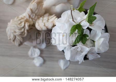 White pelargonium zonal flower still life studio shot