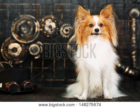 Beautiful dog breeds papillon on a dark background in the style of steampunk