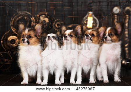 five puppies breeds papillon on a dark background in the style of steampunk
