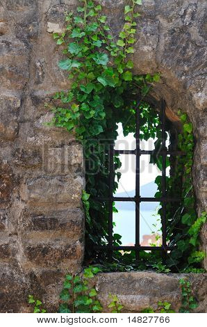 window old plant background with stone wall