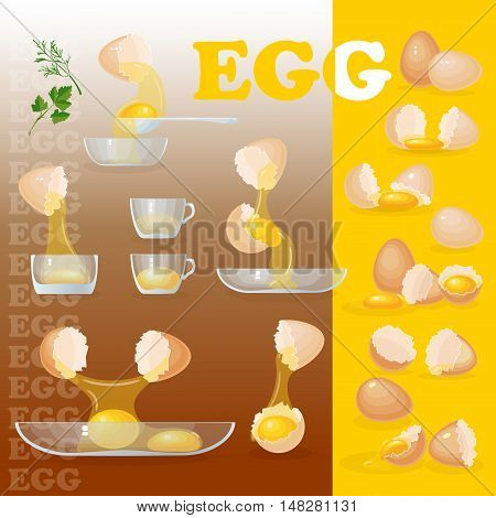 Vector illustration with eggs, yolks, white, eggshells and glass bowls. Egg set