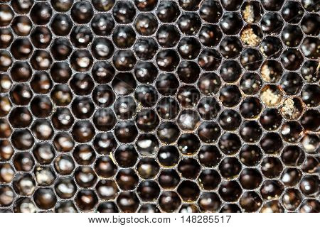 these are empty honeycomb with pollen residues.