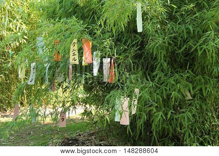 Chinese Messages Left Hanging on a Bamboo Tree.