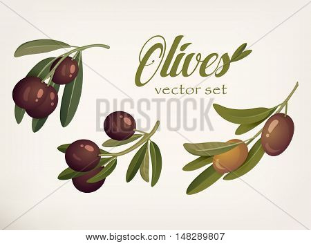 Yellow and ripe berries of olives with bleaks. Logotype for vegetarian food and bange for natural and organic botany theme, banner or sign for agriculture of greece and spain fruit cultivation