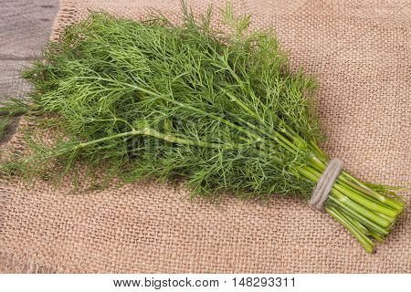 bunch of dill on a napkin sackcloth.