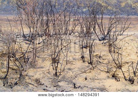 Charcoaled landscape including a field of ash and burnt plants taken after a wildfire in Southern California