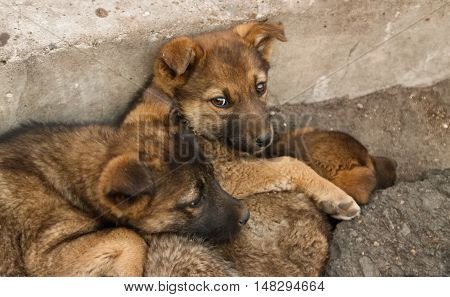 Homeless puppies lie on each other to keep warm on the ground Soft focus