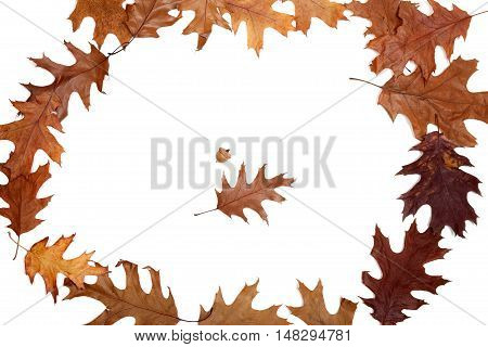 Frame Of Autumn Dried Oak Leaves