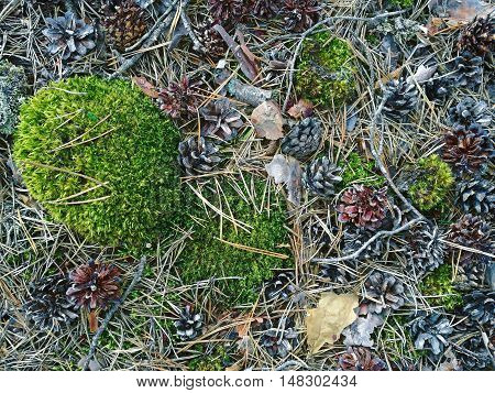 Abstract texture in cold colors of forest elements