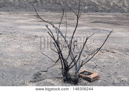 Desolate charcoaled landscape including a burnt plant and an object taken after a wildfire