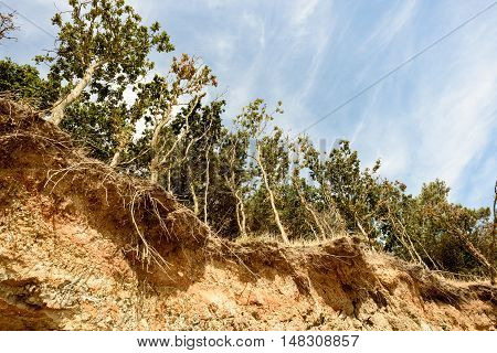 Beach Erosion And Falling Trees