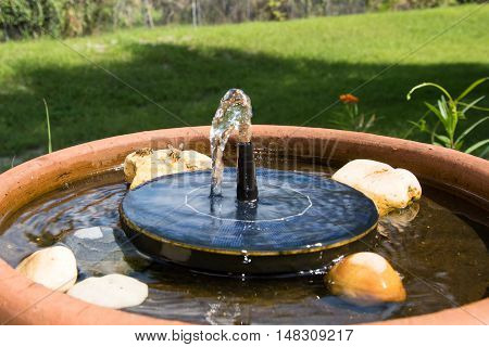 Honey bees gathering water on a fountain to bring back to the hive
