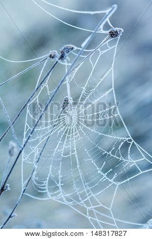 Frozen spider web covered with frost early in the morning