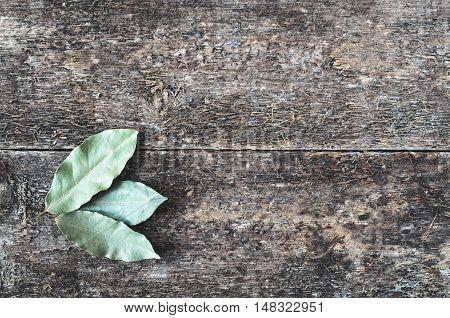 Day Leaf