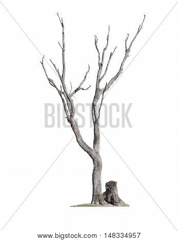 Old dry dead tree without bark and stump isolated on white background
