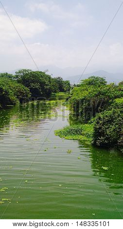 Big green flowing river with lush green brush all surrounding.